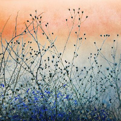 backlit weeds against a pink and blue sunset